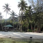 Foto de Coconut Beach Bungalows
