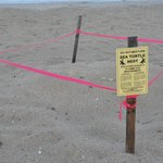 Marked out Turtle Nest on the Beach
