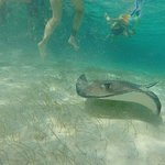 Caveman, Caye Caulker - Private Tours Foto