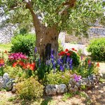 The beautiful garden at Trulli Paparale