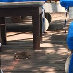 Rat running around at pool area