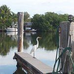 Guest for morning coffee at the boat slip picnic area