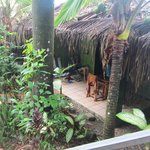 La Posada Private Jungle Bungalowsの写真