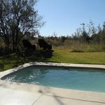 Your private plunge pool
