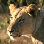 Sabi Sabi Earth Lodgeの写真