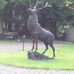Foto de Glen Albyn Lodge Invergarry Bed and Breakfast