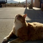 DreamCatcher Inn | Cool Cat Outside