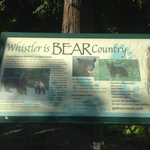 Whistler is bear country