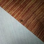 larvae/nymph stage bed bug (7/16/2014)
