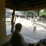 Letaba Rest Campの写真