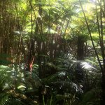 Yes...you are in a rainforest!
