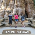 Photo of General Sherman Tree
