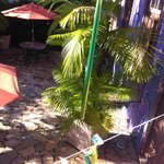 Photo of Casa Cool Beans B&B - Santa Teresa