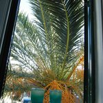 Yes, the palm tree was trying to get inside. We loved it!