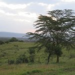 Lake Nakuru Lodge의 사진