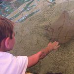 Touch and feed the stingrays