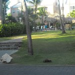 Foto di Divi Village Golf and Beach Resort