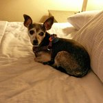 Awesome pet friendly hotel!  Annie loved her stay.