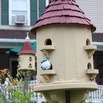 Cute little birdhouse