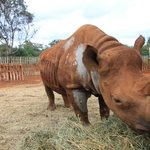 Maxwell , the blind rhino at DSWT