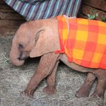 tiny baby Kamok is kept warm with blanket