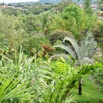 Berni's beautiful garden - tropical paradise in the city