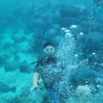 Simon Wong and a school of bump head parrot fish