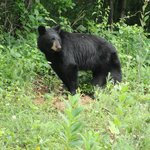 Bear cub along road