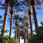 Photo de Westin Kierland Resort and Spa
