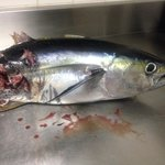Yellowfin caught at sau bay