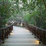 Path through the mangroves to pool/beach