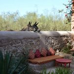 Donkeys coming to say hi at breakfast