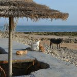 Cats and donkeys at Abdou's beach