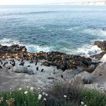Photo of La Jolla Cove