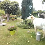 Eclectic garden with a random fake cow!
