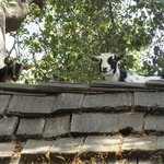 Cookie & Oreo up on their rooftop!