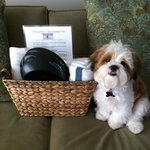 puppy's welcome basket