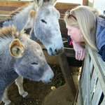 sweet donkeys