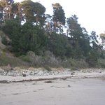 small forest area along the beach