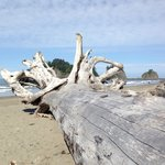 Foto Quileute Oceanside Resort