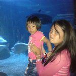 Sea World Foto
