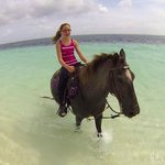Hoarseback riding - rented from Caicos Corrals