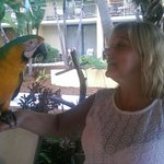 Friendly Parrot in the Bar