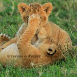 Photo de Julius Safaris - Private Day Trips