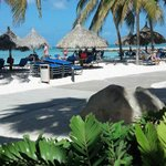 Фотография Divi Aruba Phoenix Beach Resort