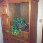 Armoire with fake plant where TV was.