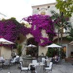 Beautiful old bougainvillea vines in the courtyard