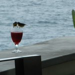 Hummingbirds feeding at the infinity pool bar