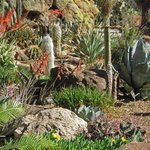 Succulents and cacti near the Children's Garden