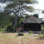 Mapito Tented Camp Serengeti Foto